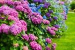 fotolia-46525981-subscription-monthly-m-plus