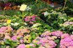 fotolia-66428327-subscription-monthly-m-plus